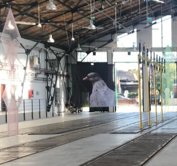 Agnieszka Polska, The Wayward Pigeon, 2019, Installation at Tram Museum, Motif for the public space and the website of the Art Encounters Biennial 2019, Courtesy: die Künstlerin