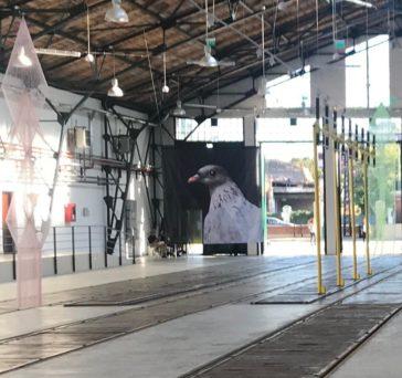 Agnieszka Polska, The Wayward Pigeon, 2019, Motif für den öffentlichen Raum und die Internet Präsenz der Art Encounters Biennial 2019, Installation im Tram Museum, Courtesy: die Künstlerin