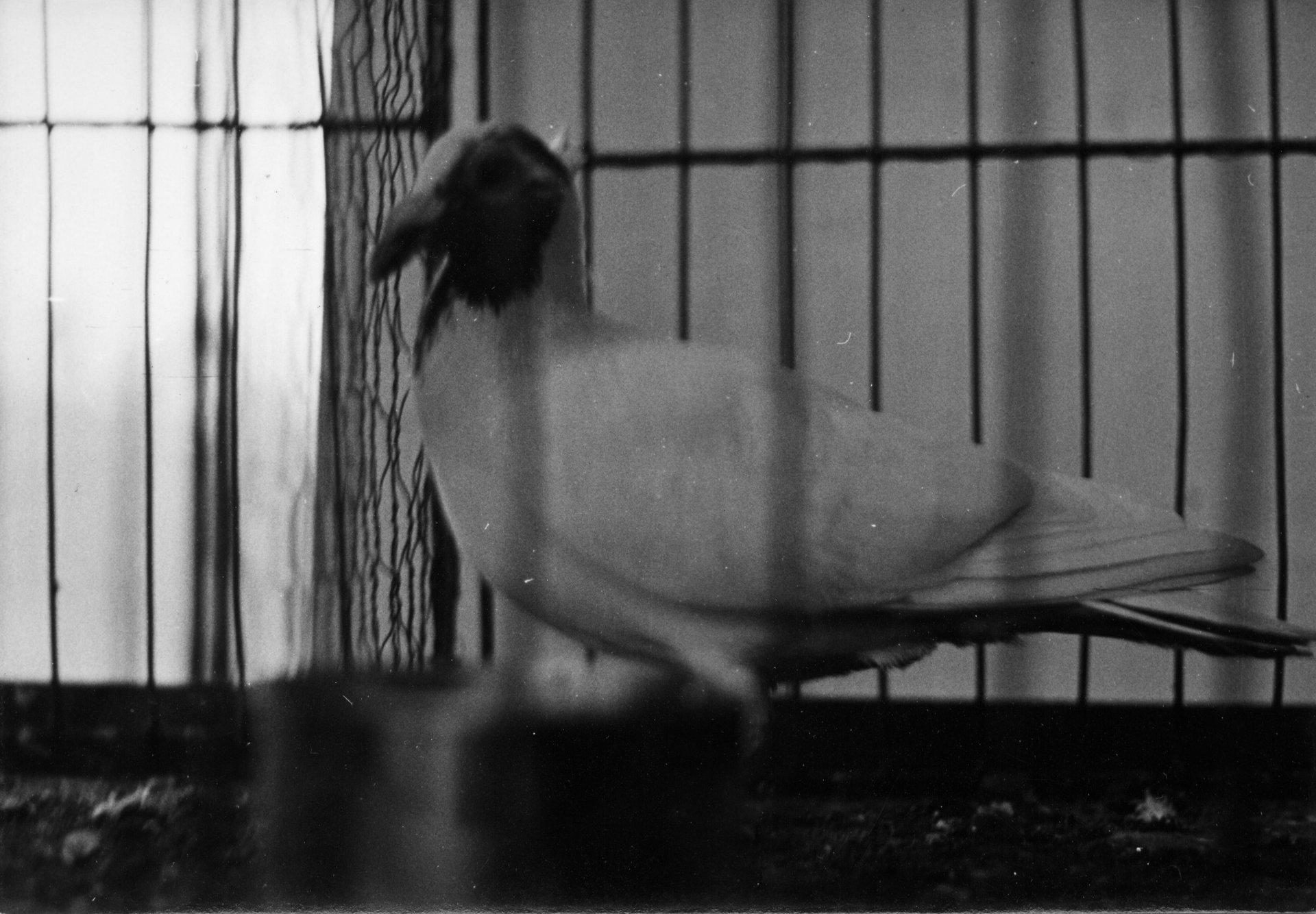 Petra Feriancová, Series Creator – From the Archive of O. Ferianc, New Breeds 1949-1952, 2008, (37/112)