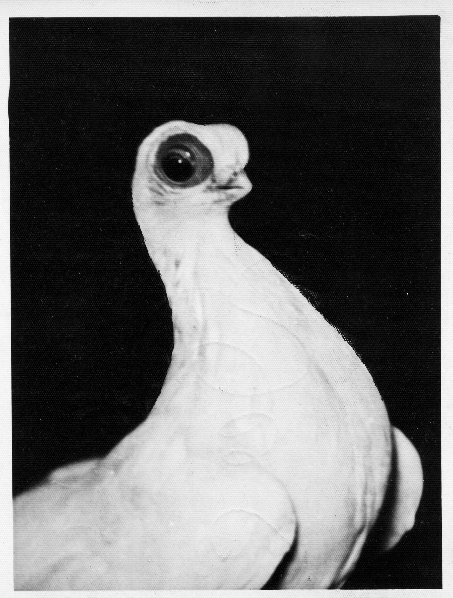 Petra Feriancová, Series Creator – From the Archive of O. Ferianc, New Breeds 1949-1952, 2008, (16/112)