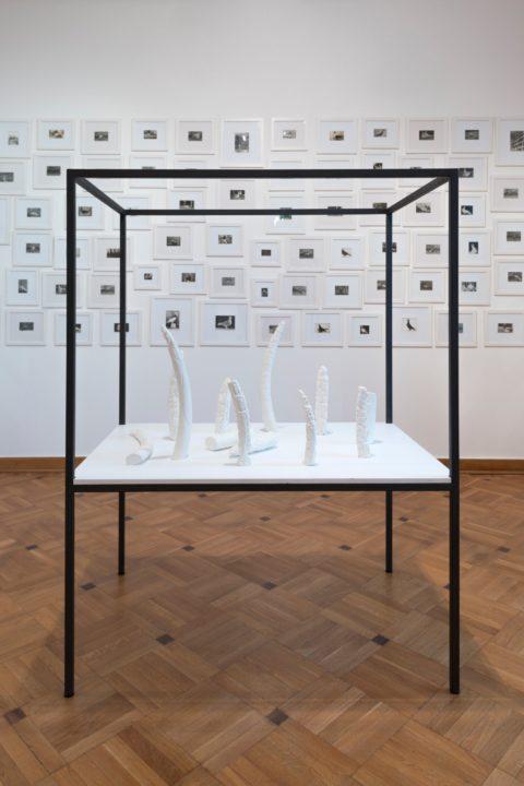 Petra Feriancová, Untitled, 2014