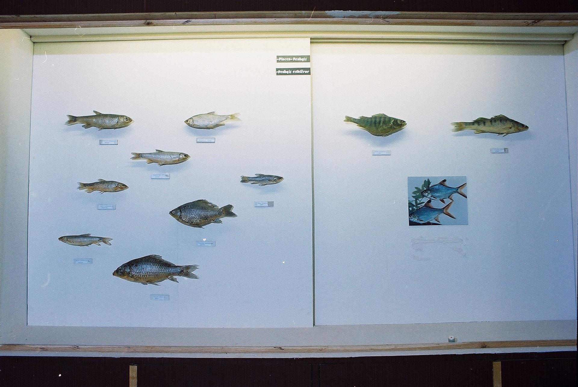 Petrit Halilaj, Special Edition (ex-Natural History Museum of Kosovo), 2013 (76/80)