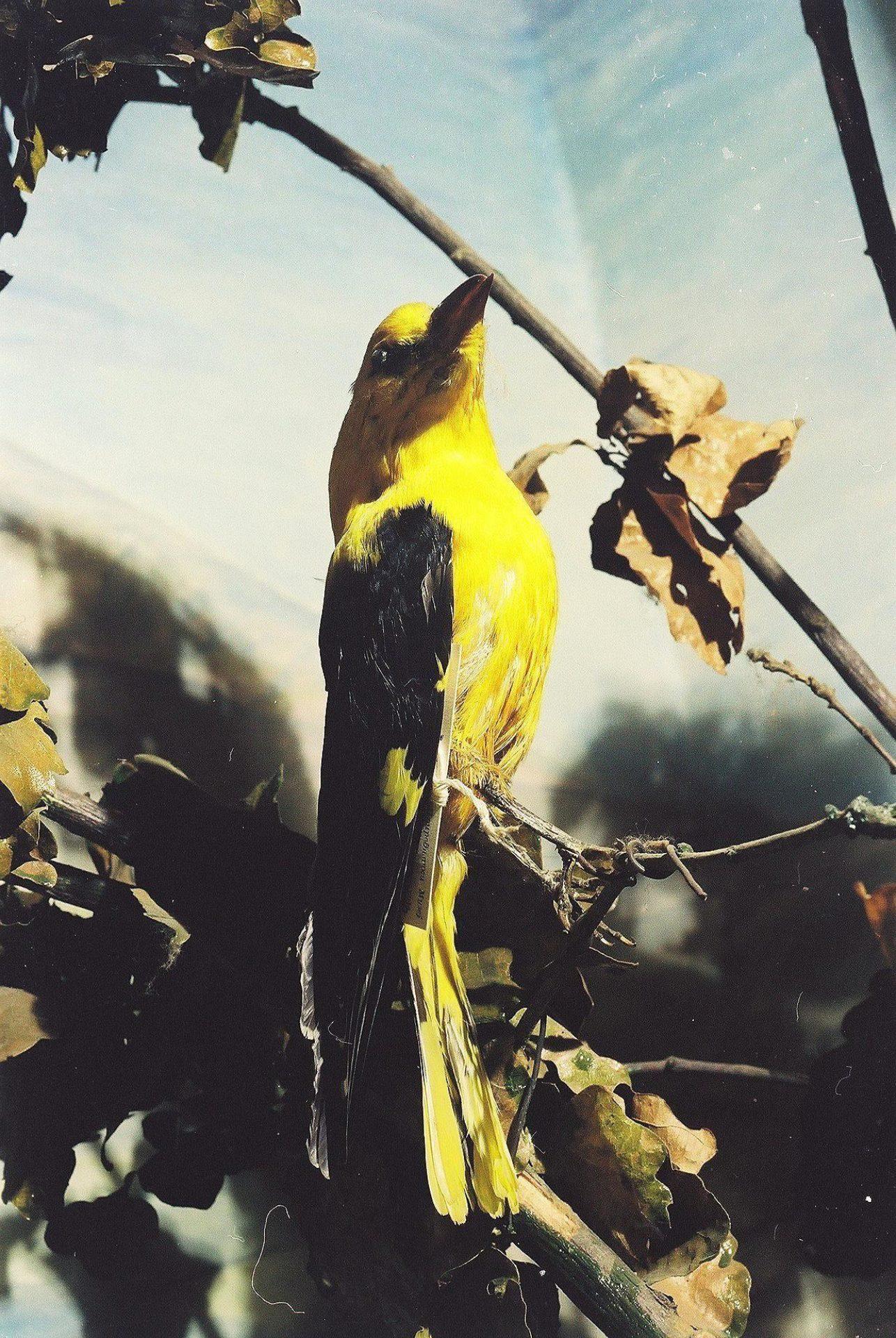 Petrit Halilaj, Special Edition (ex-Natural History Museum of Kosovo), 2013 (01/80)