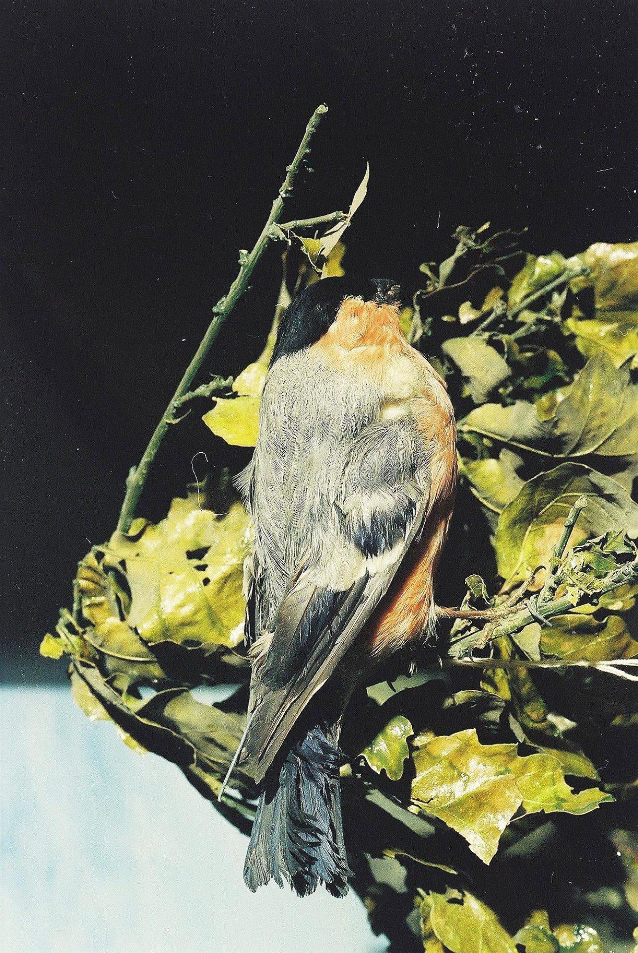 Petrit Halilaj, Special Edition (ex-Natural History Museum of Kosovo), 2013 (02/80)
