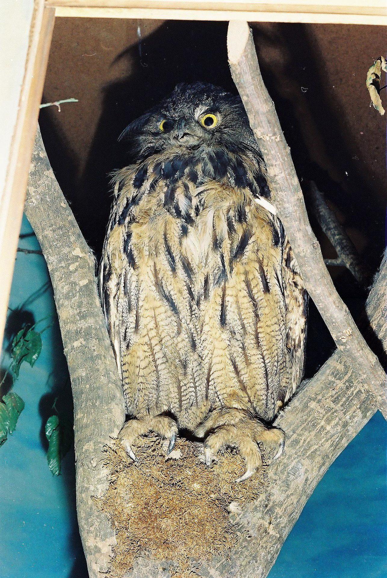 Petrit Halilaj, Special Edition (ex-Natural History Museum of Kosovo), 2013 (11/80)