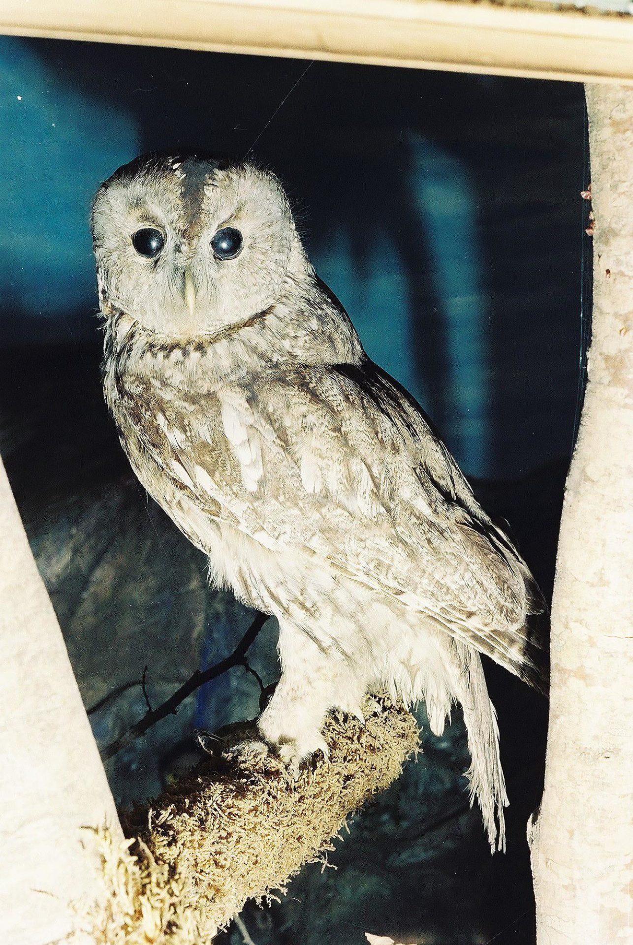 Petrit Halilaj, Special Edition (ex-Natural History Museum of Kosovo), 2013 (12/80)