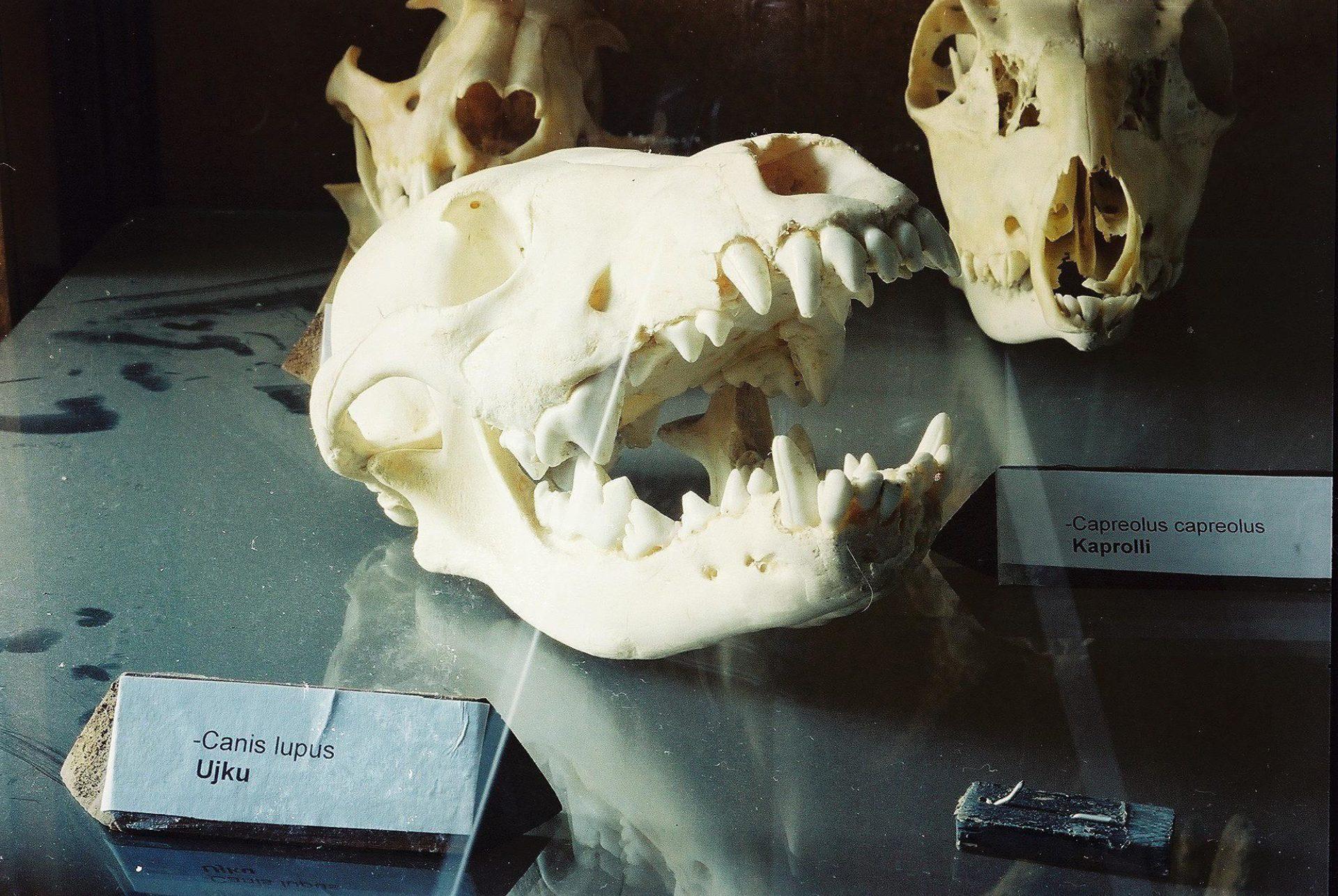 Petrit Halilaj, Special Edition (ex-Natural History Museum of Kosovo), 2013 (15/80)