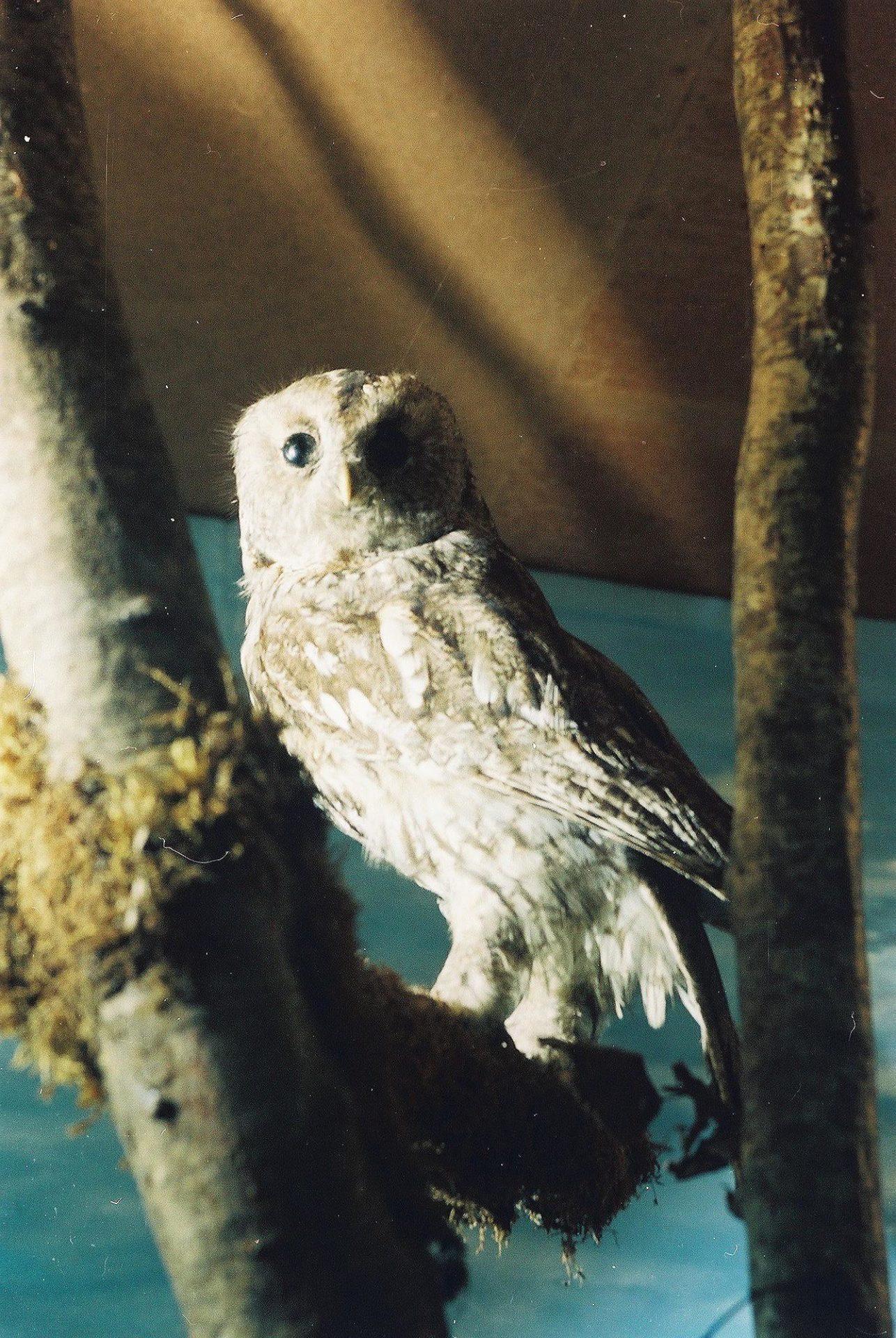 Petrit Halilaj, Special Edition (ex-Natural History Museum of Kosovo), 2013 (17/80)
