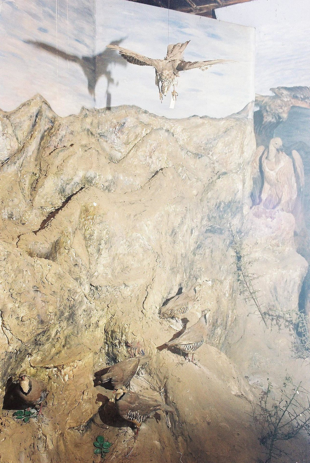 Petrit Halilaj, Special Edition (ex-Natural History Museum of Kosovo), 2013 (21/80)