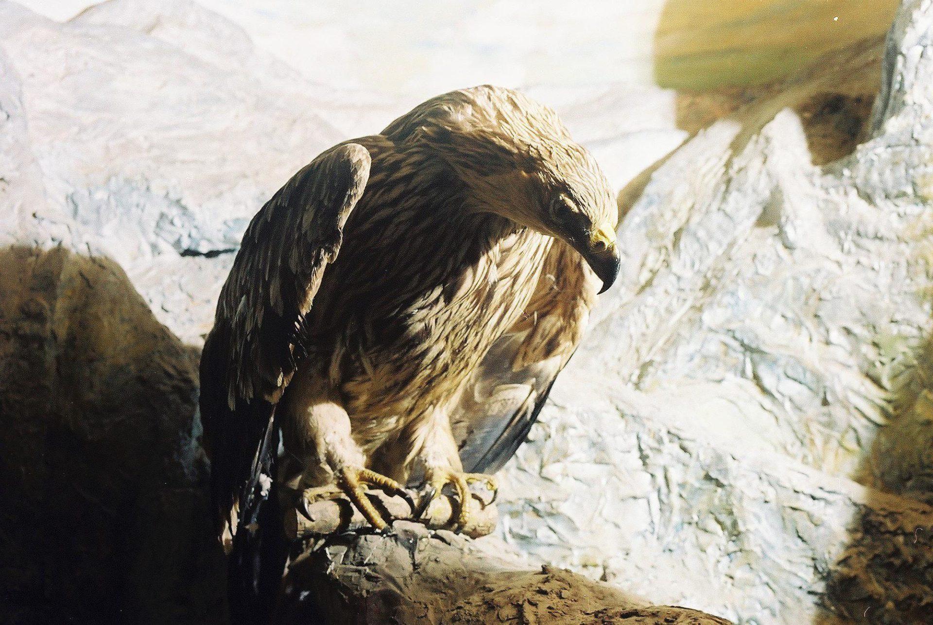 Petrit Halilaj, Special Edition (ex-Natural History Museum of Kosovo), 2013 (27/80)