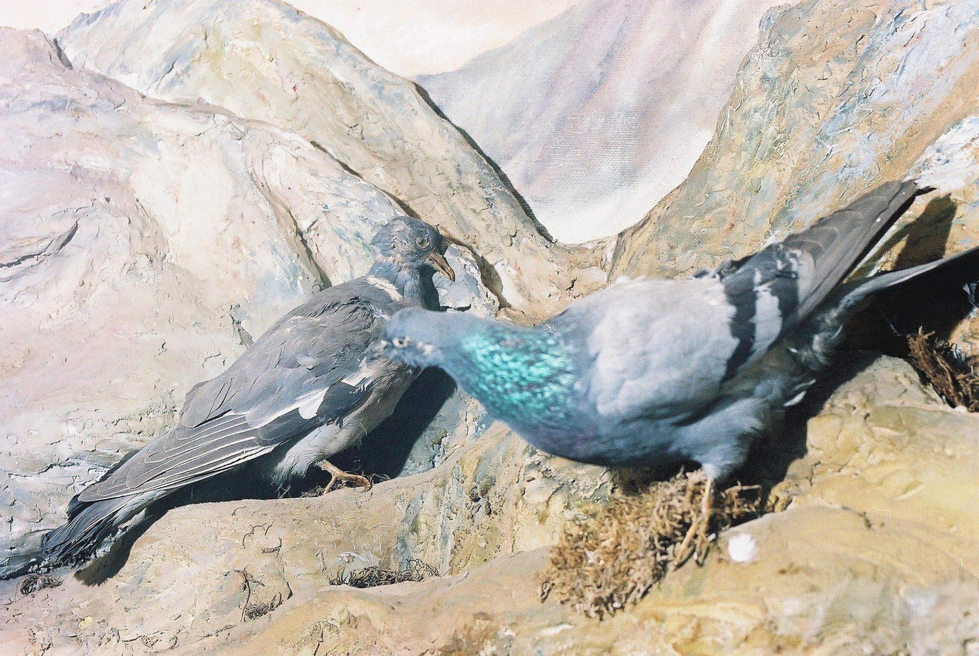 Petrit Halilaj, Special Edition (ex-Natural History Museum of Kosovo), 2013 (28/80)