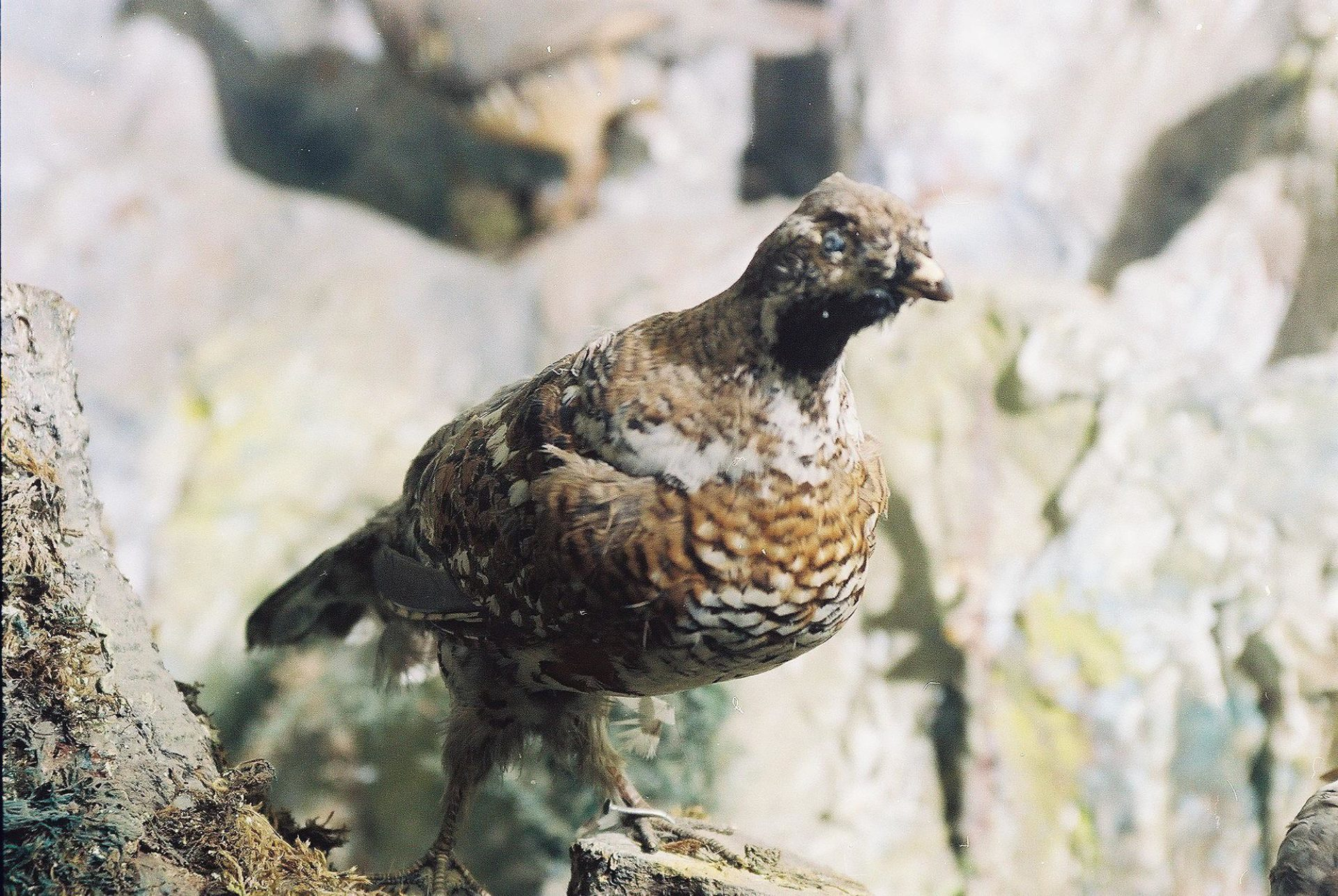 Petrit Halilaj, Special Edition (ex-Natural History Museum of Kosovo), 2013 (30/80)