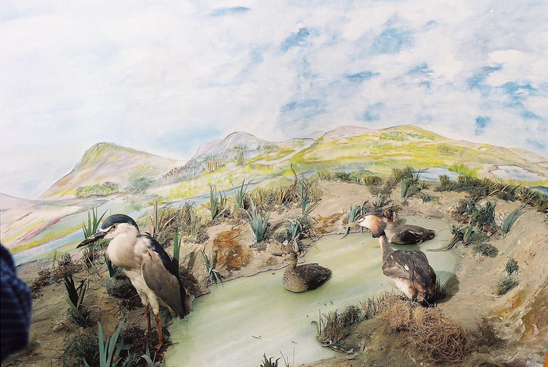Petrit Halilaj, Special Edition (ex-Natural History Museum of Kosovo), 2013 (33/80)