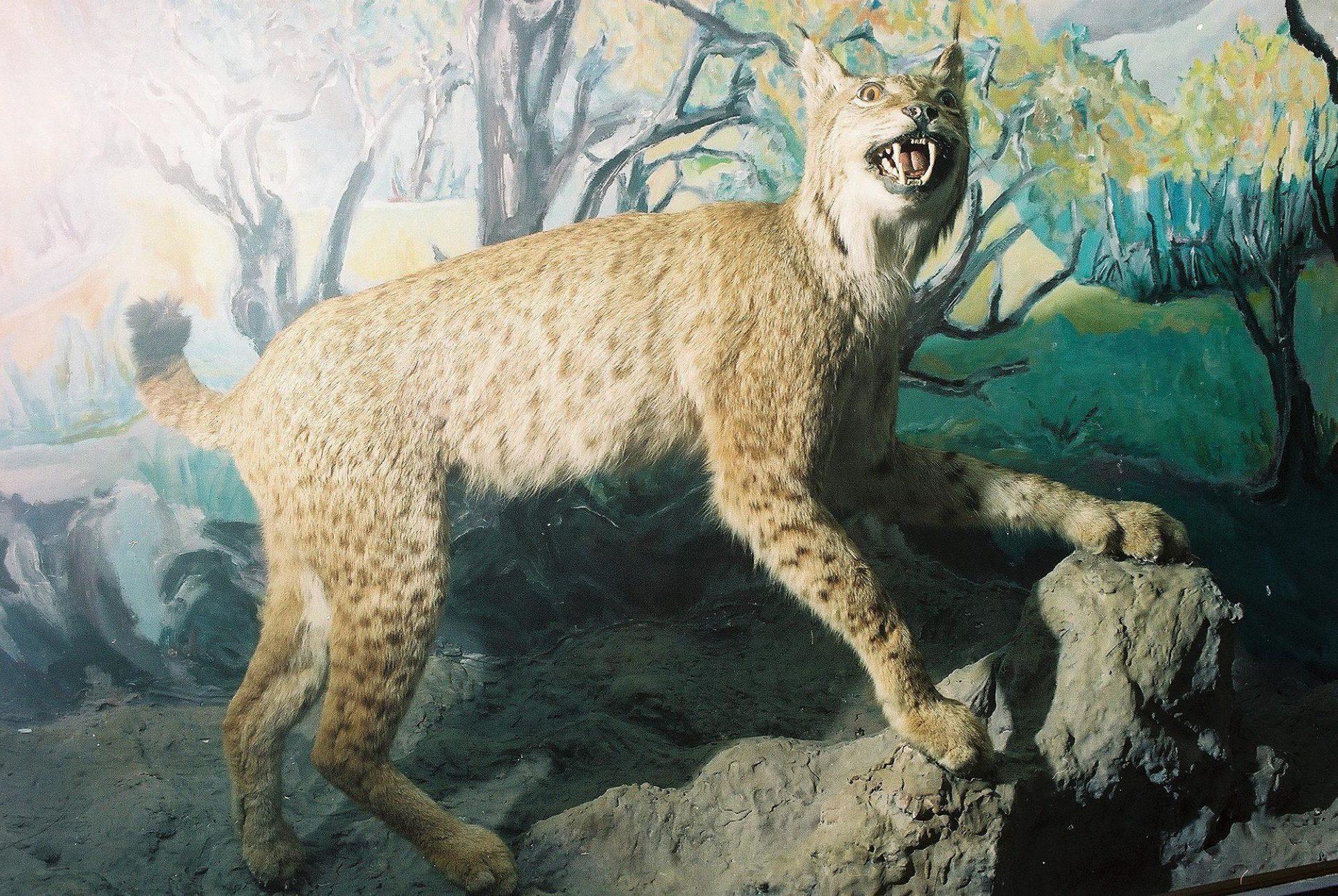 Petrit Halilaj, Special Edition (ex-Natural History Museum of Kosovo), 2013 (36/80)
