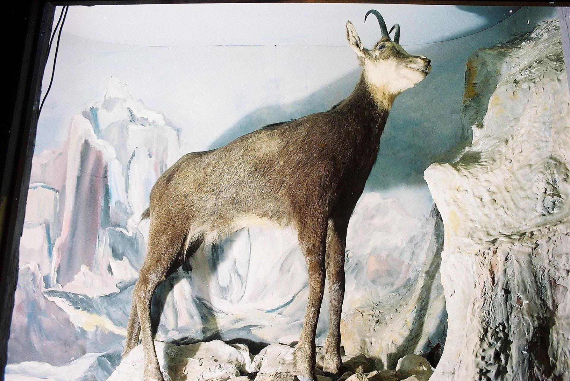 Petrit Halilaj, Special Edition (ex-Natural History Museum of Kosovo), 2013 (37/80)