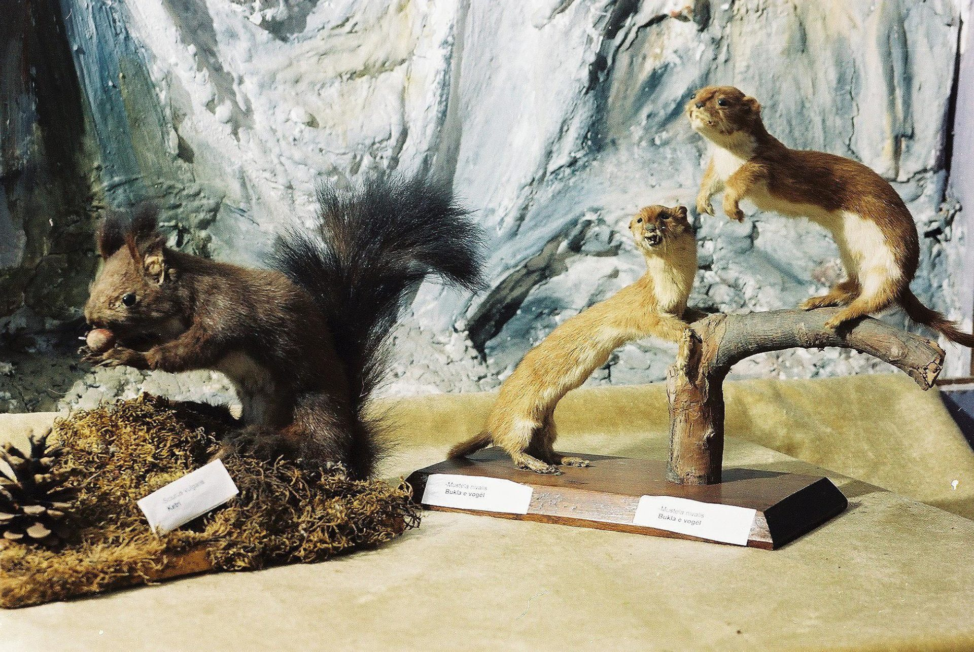 Petrit Halilaj, Special Edition (ex-Natural History Museum of Kosovo), 2013 (39/80)