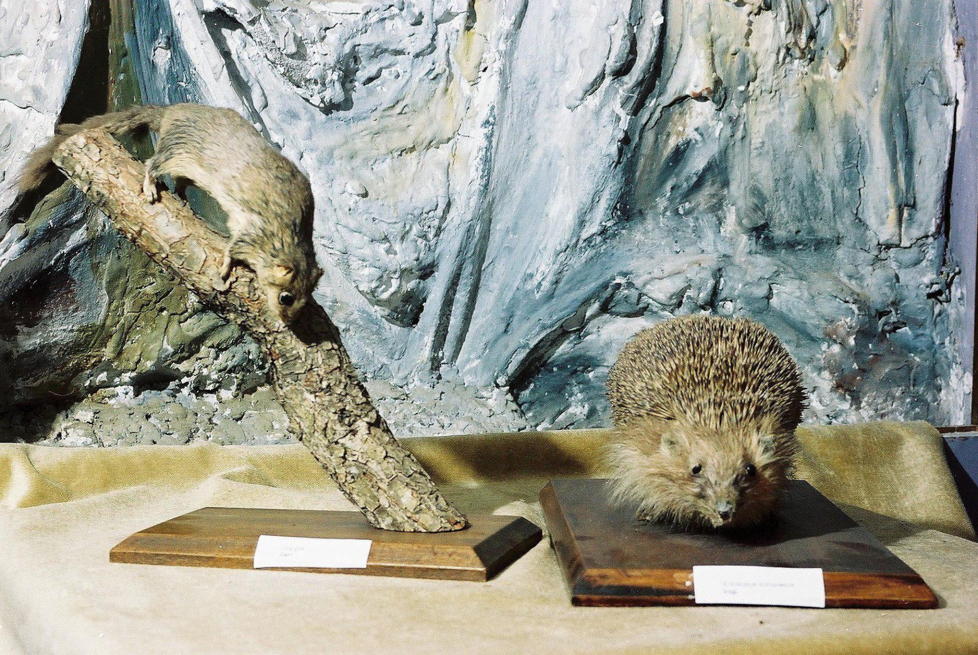 Petrit Halilaj, Special Edition (ex-Natural History Museum of Kosovo), 2013 (41/80)