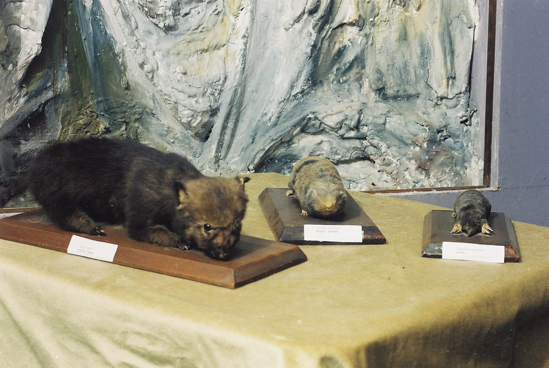 Petrit Halilaj, Special Edition (ex-Natural History Museum of Kosovo), 2013 (42/80)
