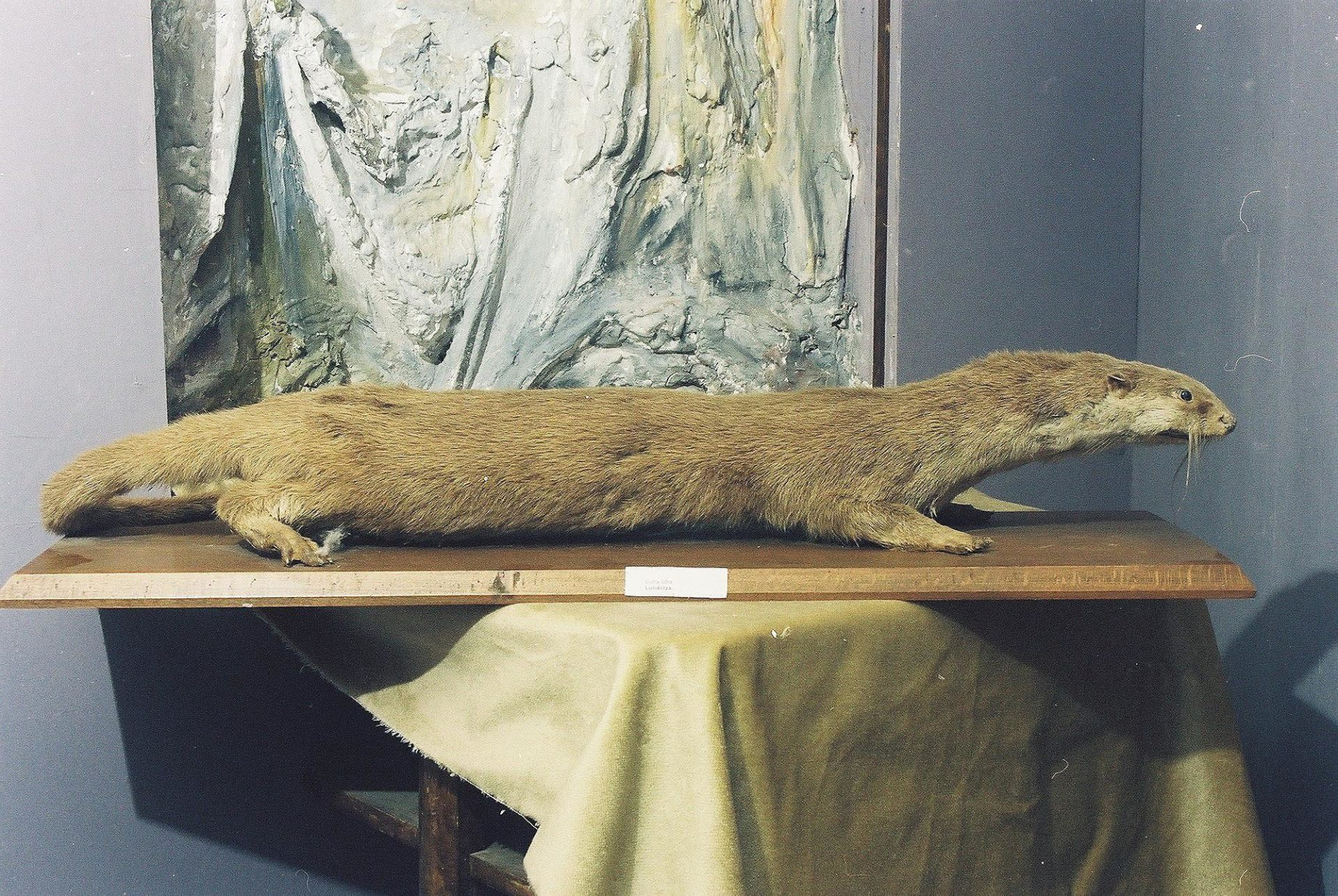 Petrit Halilaj, Special Edition (ex-Natural History Museum of Kosovo), 2013 (45/80)