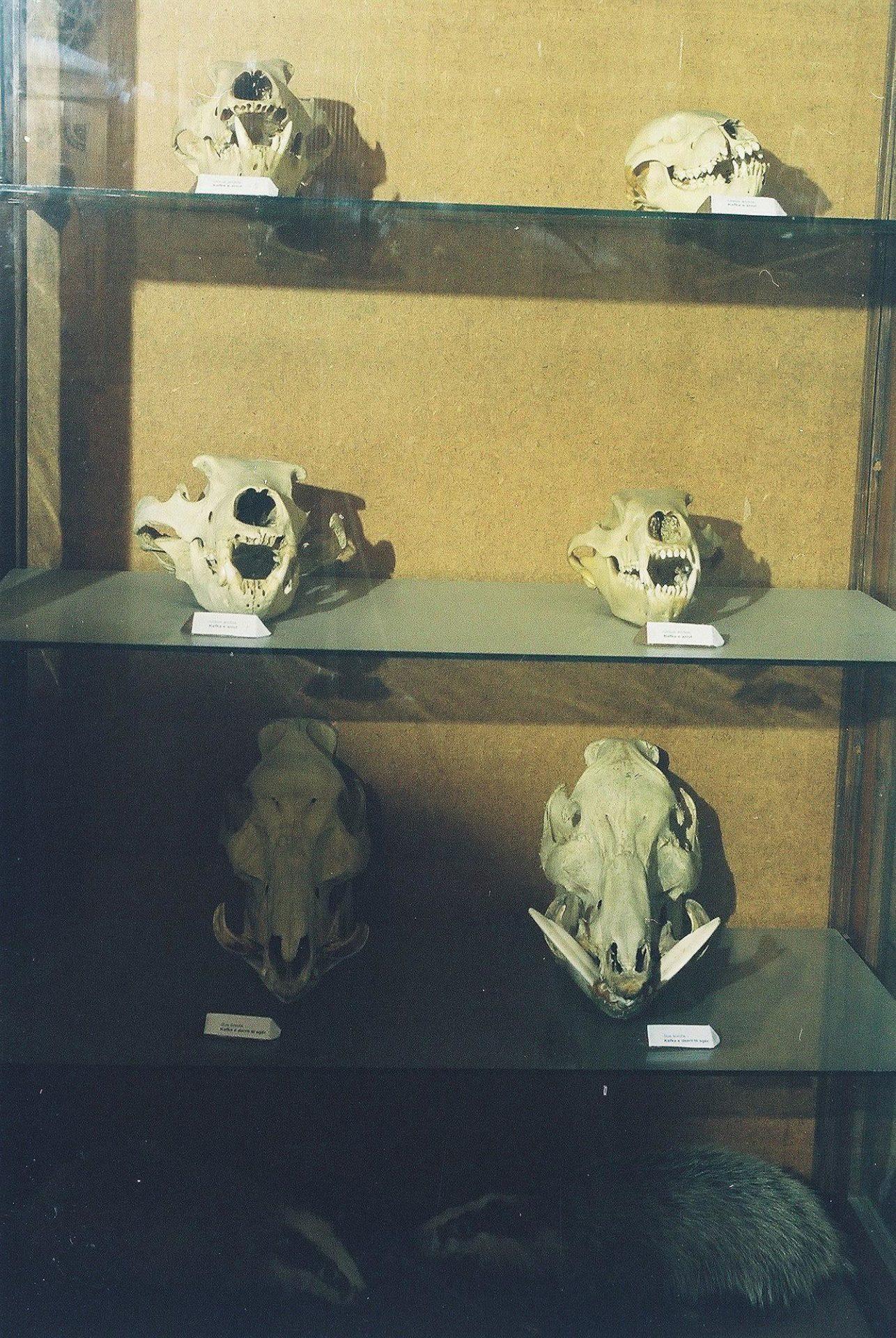 Petrit Halilaj, Special Edition (ex-Natural History Museum of Kosovo), 2013 (46/80)
