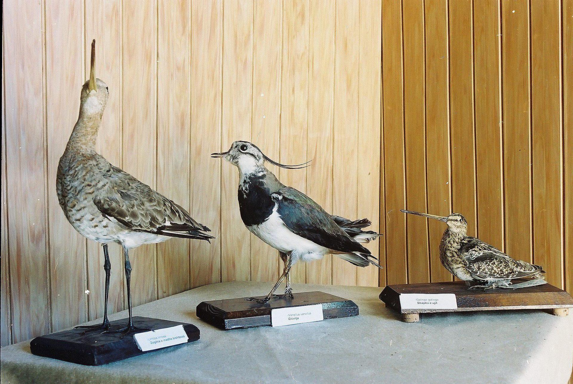 Petrit Halilaj, Special Edition (ex-Natural History Museum of Kosovo), 2013 (52/80)