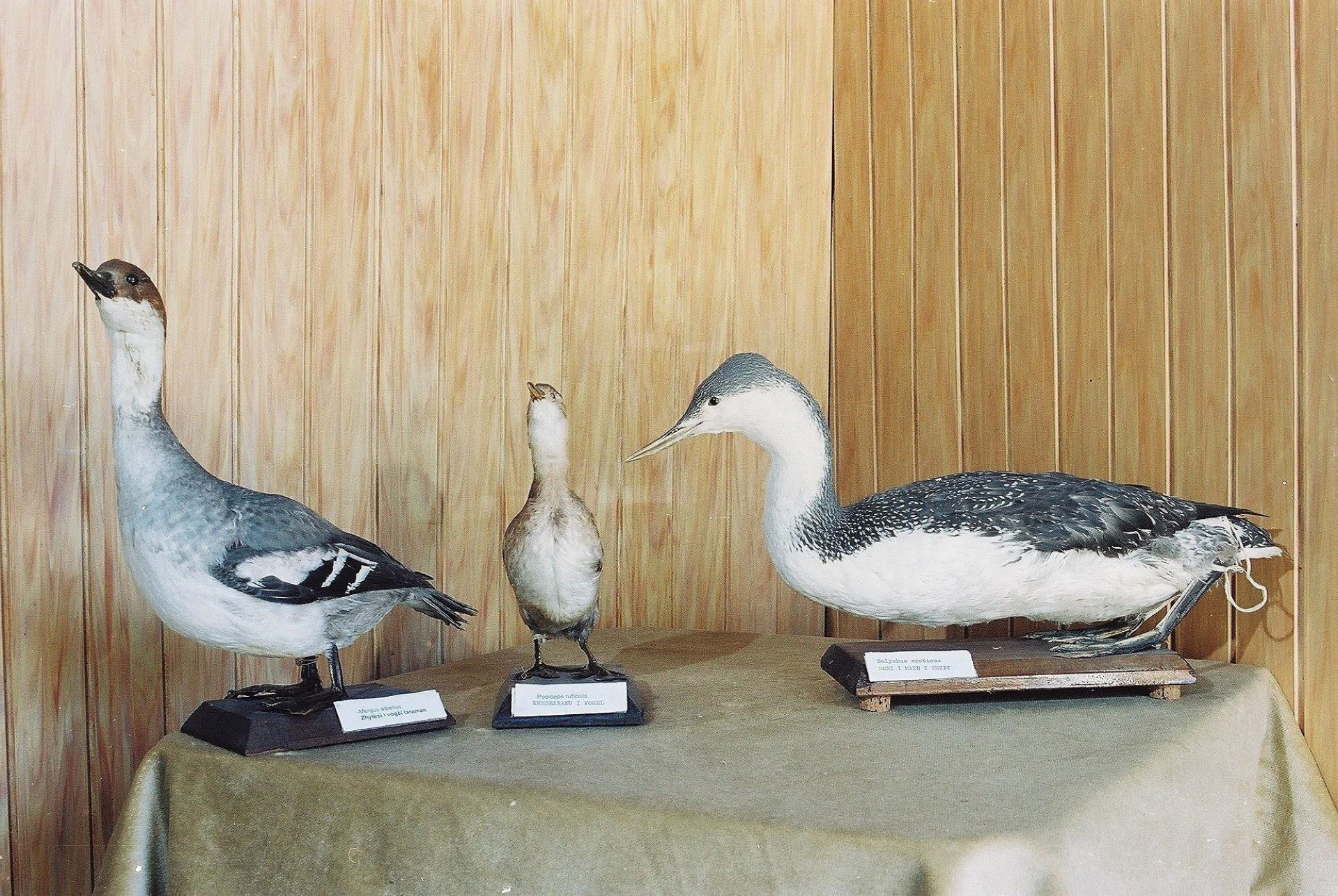 Petrit Halilaj, Special Edition (ex-Natural History Museum of Kosovo), 2013 (55/80)