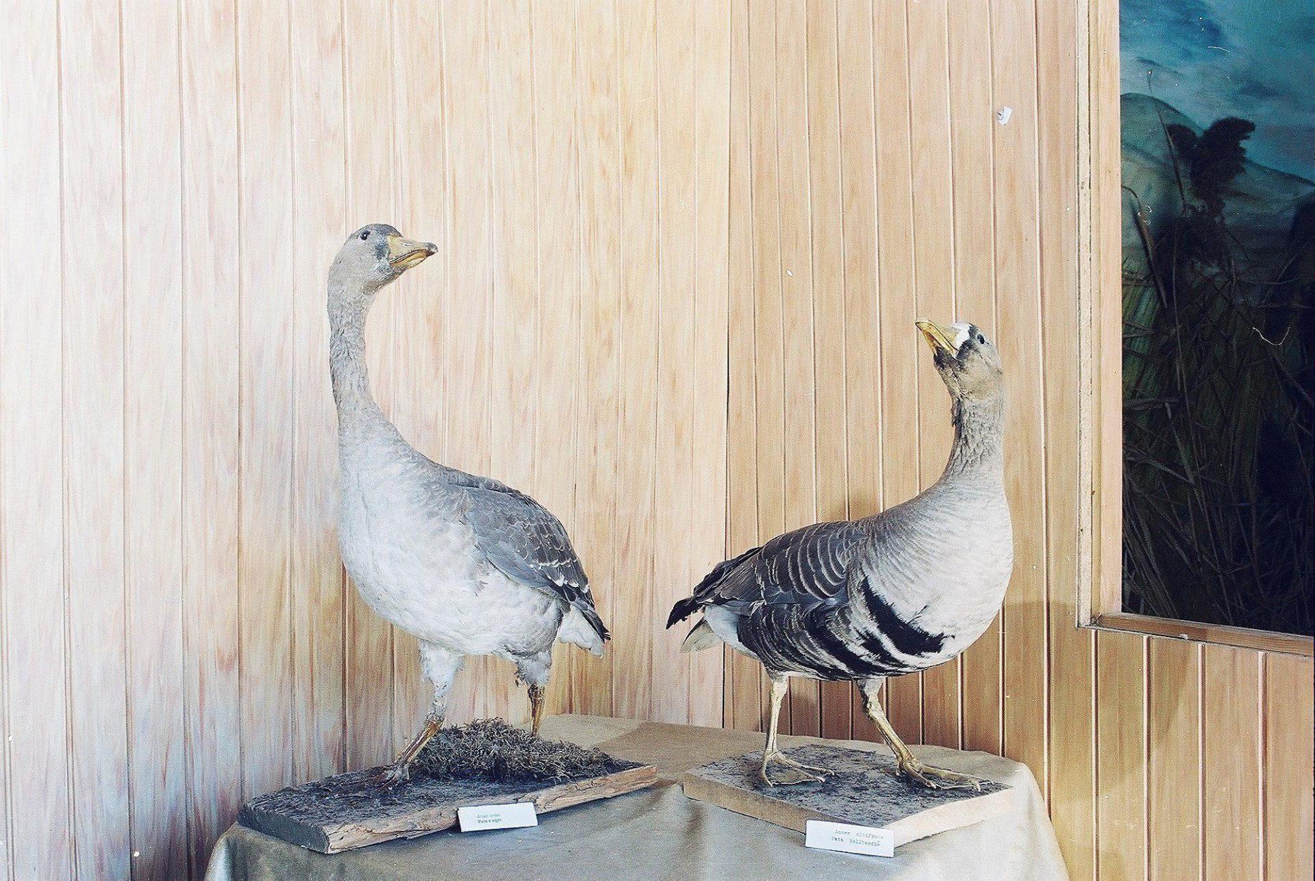 Petrit Halilaj, Special Edition (ex-Natural History Museum of Kosovo), 2013 (59/80)