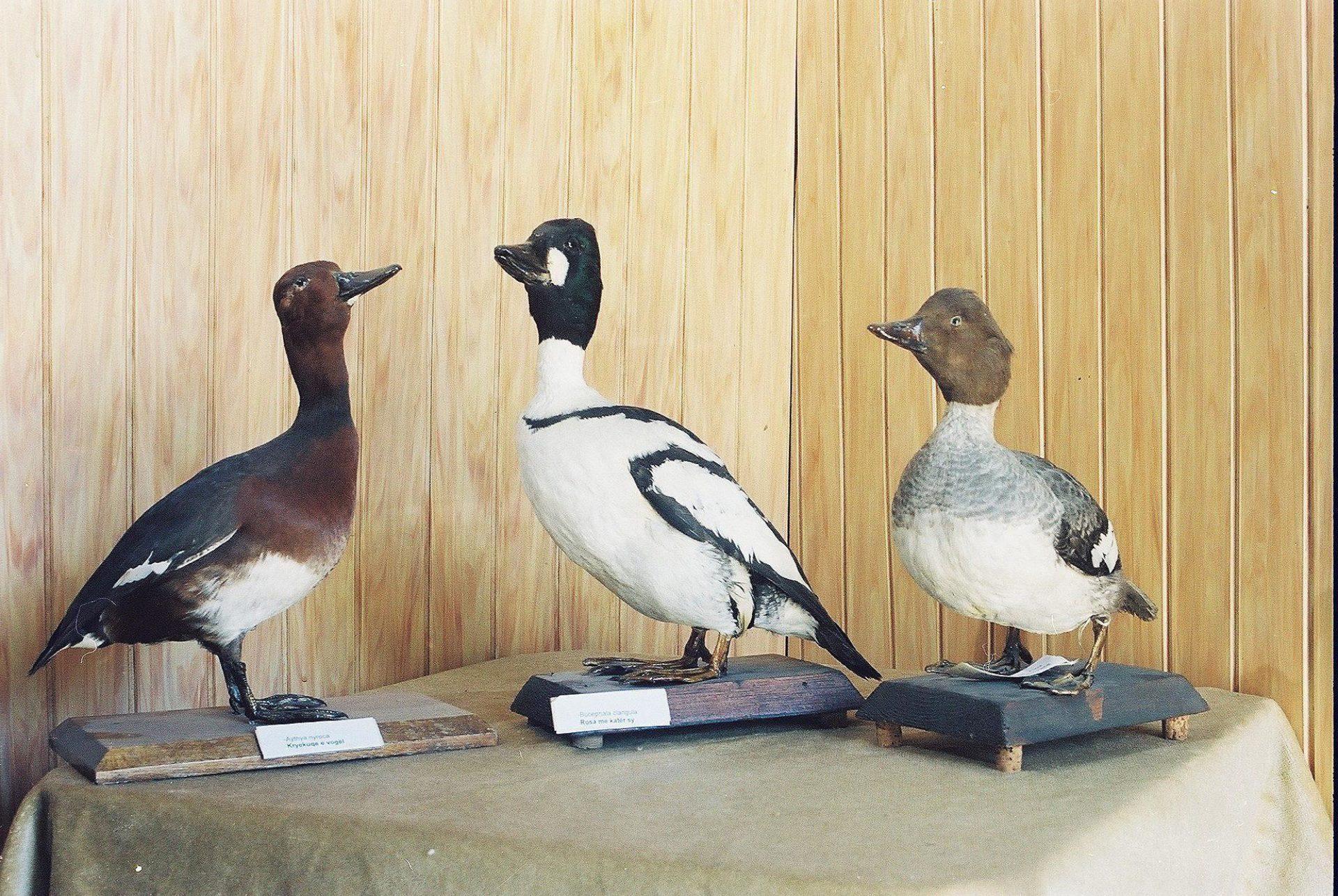 Petrit Halilaj, Special Edition (ex-Natural History Museum of Kosovo), 2013 (63/80)