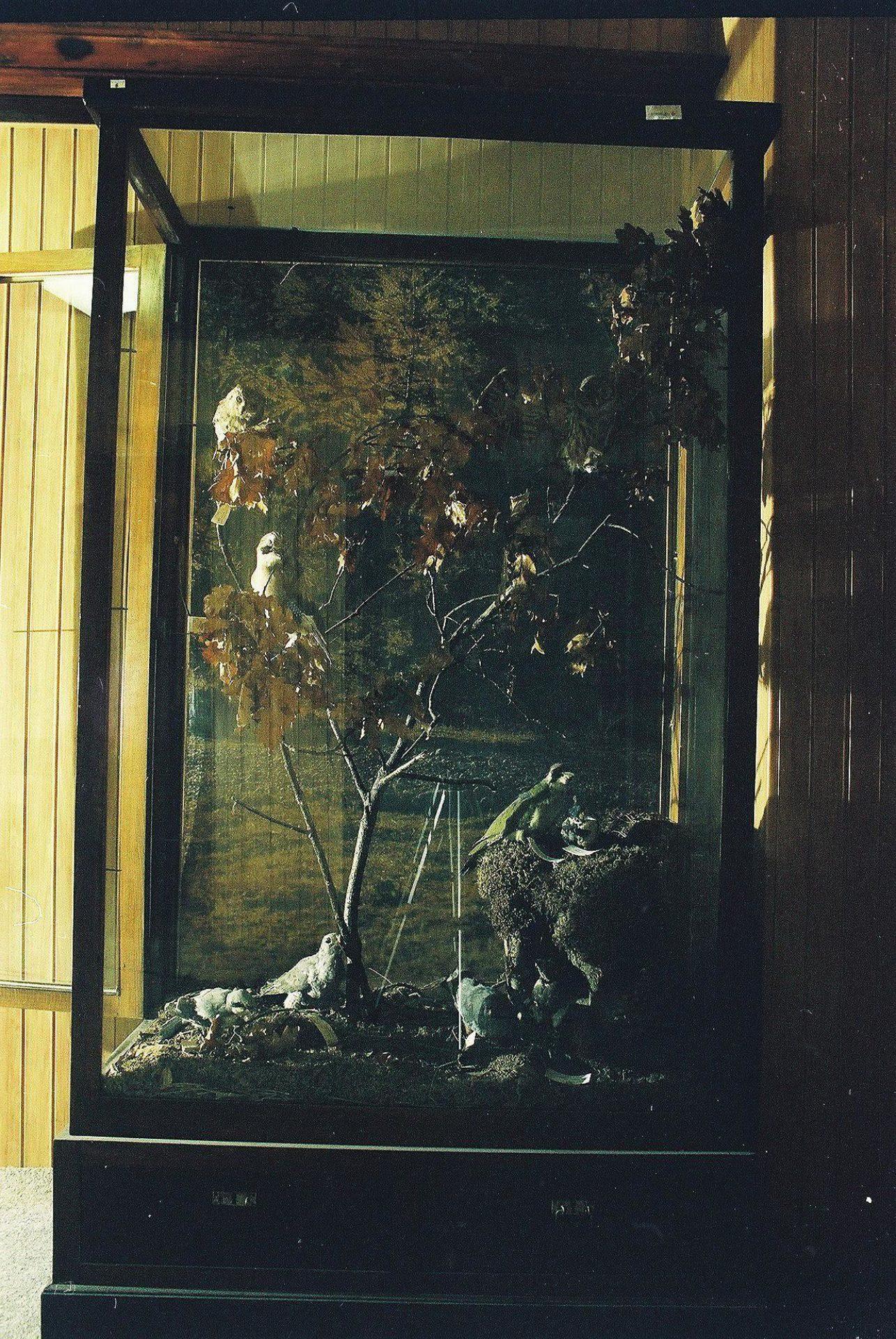 Petrit Halilaj, Special Edition (ex-Natural History Museum of Kosovo), 2013 (70/80)