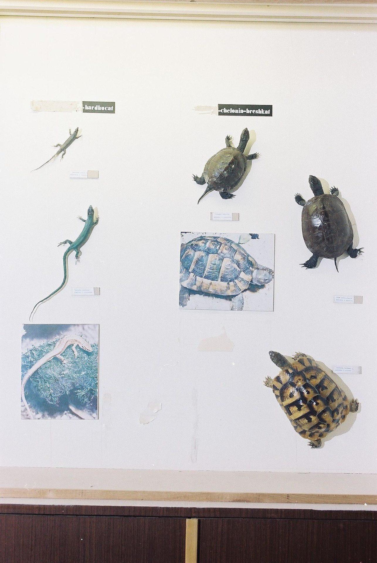 Petrit Halilaj, Special Edition (ex-Natural History Museum of Kosovo), 2013 (73/80)