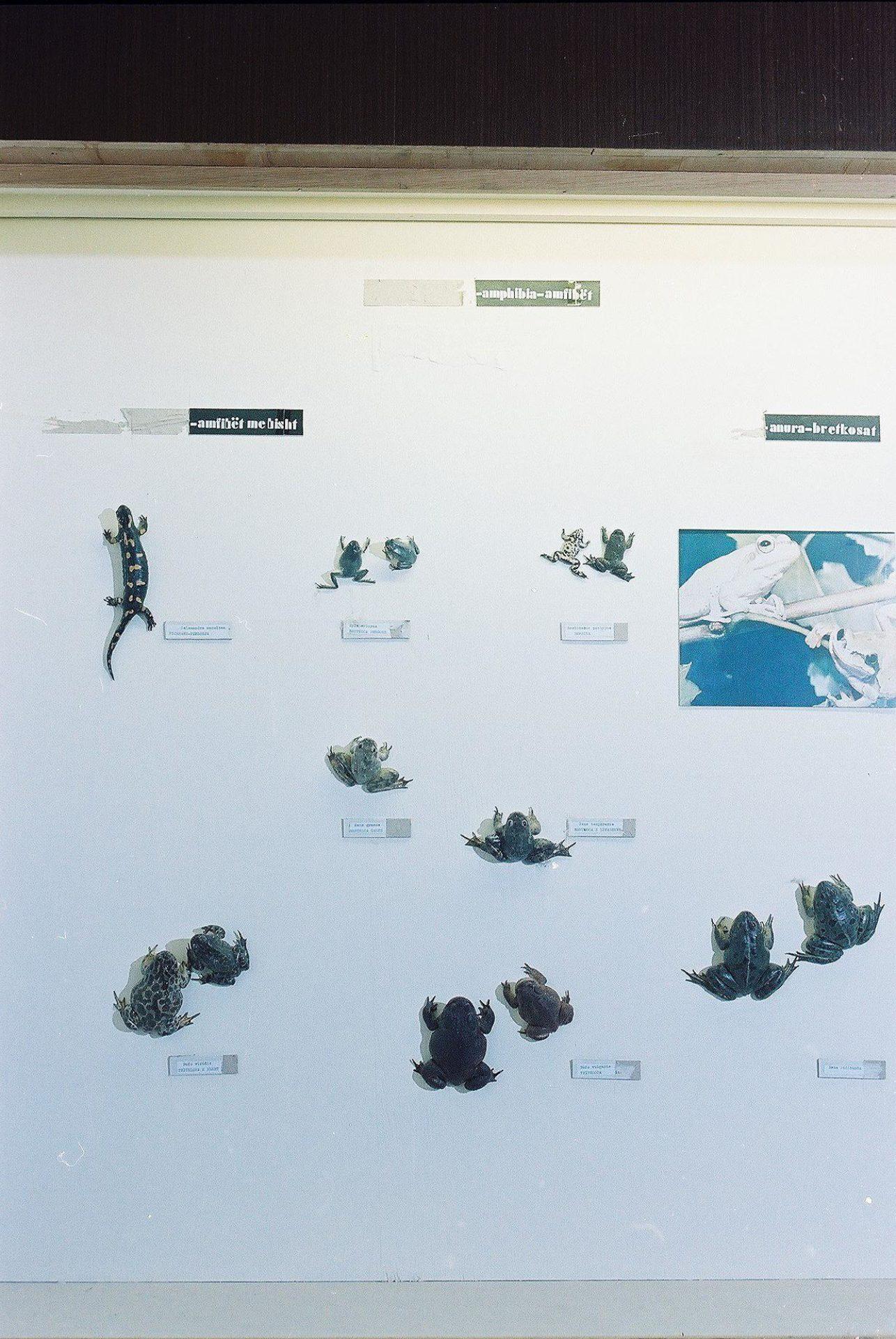 Petrit Halilaj, Special Edition (ex-Natural History Museum of Kosovo), 2013 (74/80)