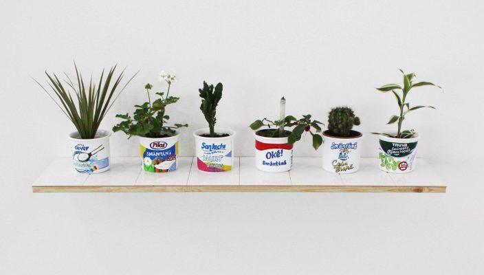 Vlad Nancã, Flower Pots, 2011–2013